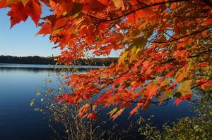 Carlin Lake Fall-1