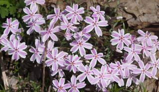 Flowers 019 Crop.jpg