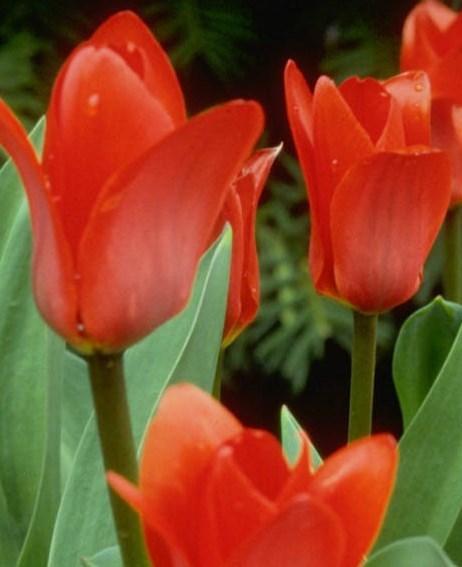 Flowers CropTwo.jpg