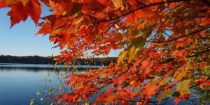 HP Fall Leaves
