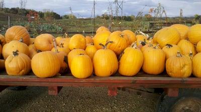 Pumpkins 030