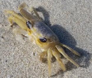 Sand Crab Beach